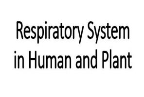 Overview Of Respiration System In Human And Plant